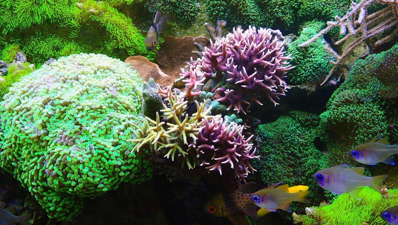 corals.jpg.de72aa5392d2a013852bc30687cac899.jpg