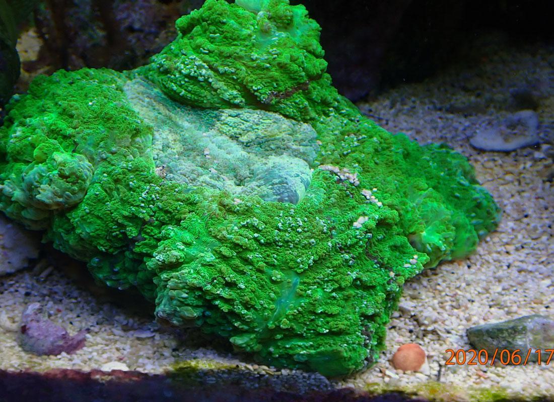 coral1.jpg.1c7e69311d61708ae2e1fb87fbfe2ff9.jpg