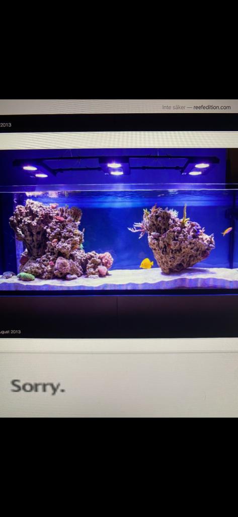 reef tank.png