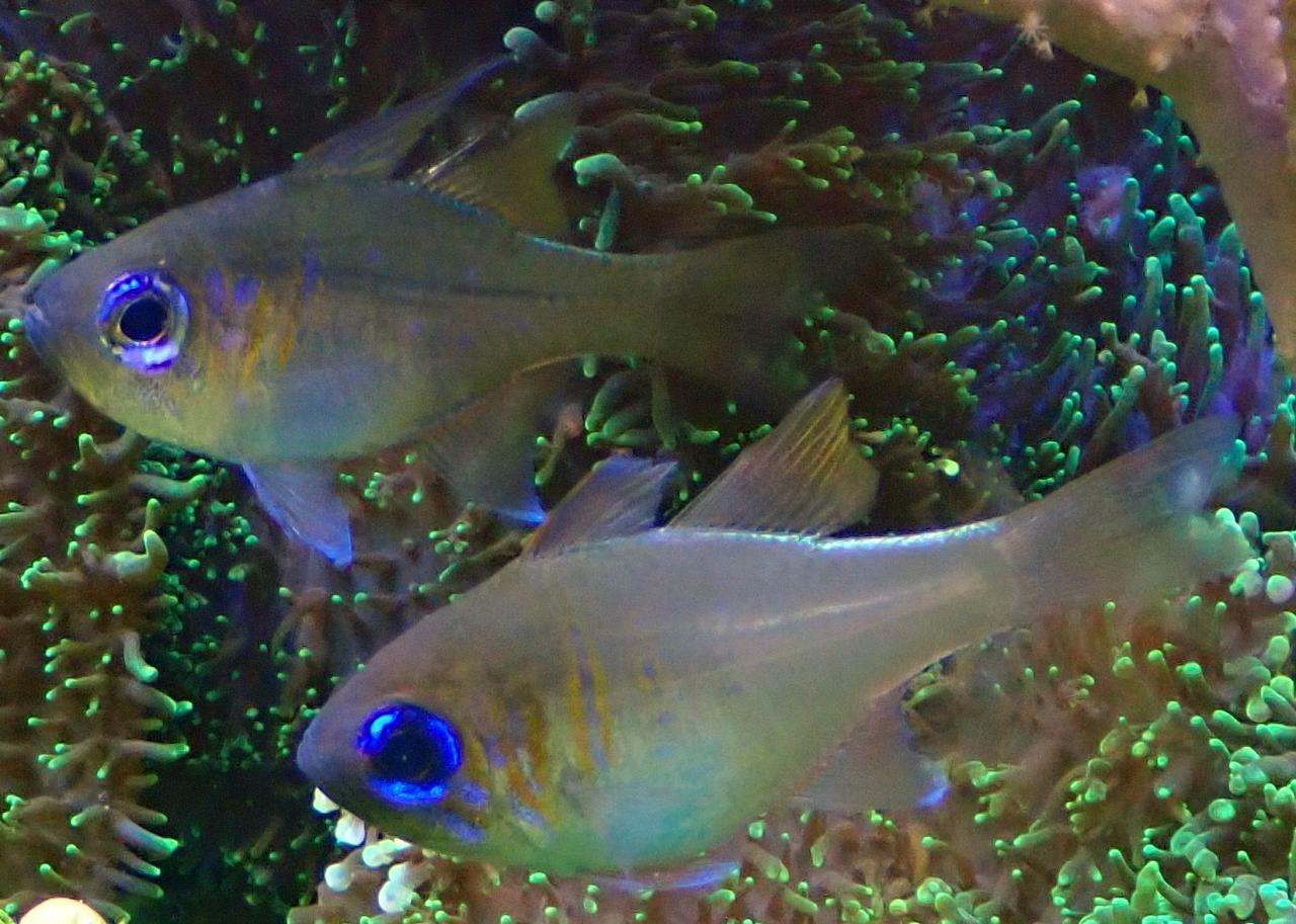 fish1.jpg.14dcd31e3366a1462e69c3f69614f07d.jpg