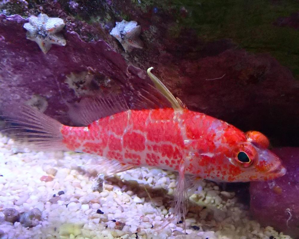 fish4.jpg.448dc18aa01477ca40162b379ff9c959.jpg