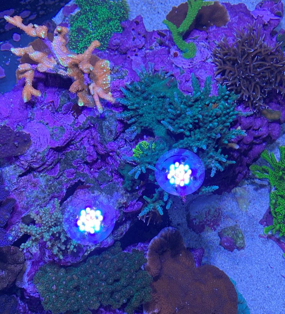 korall9 (2).jpg