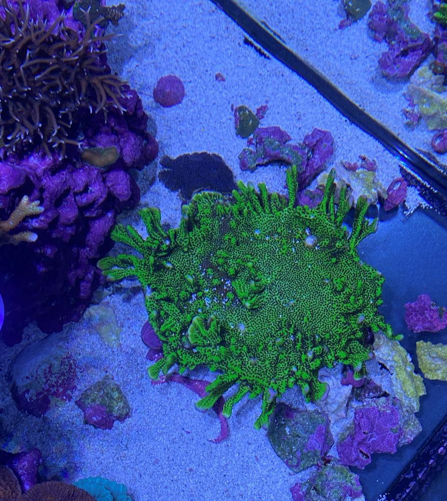 korall10 (2).jpg