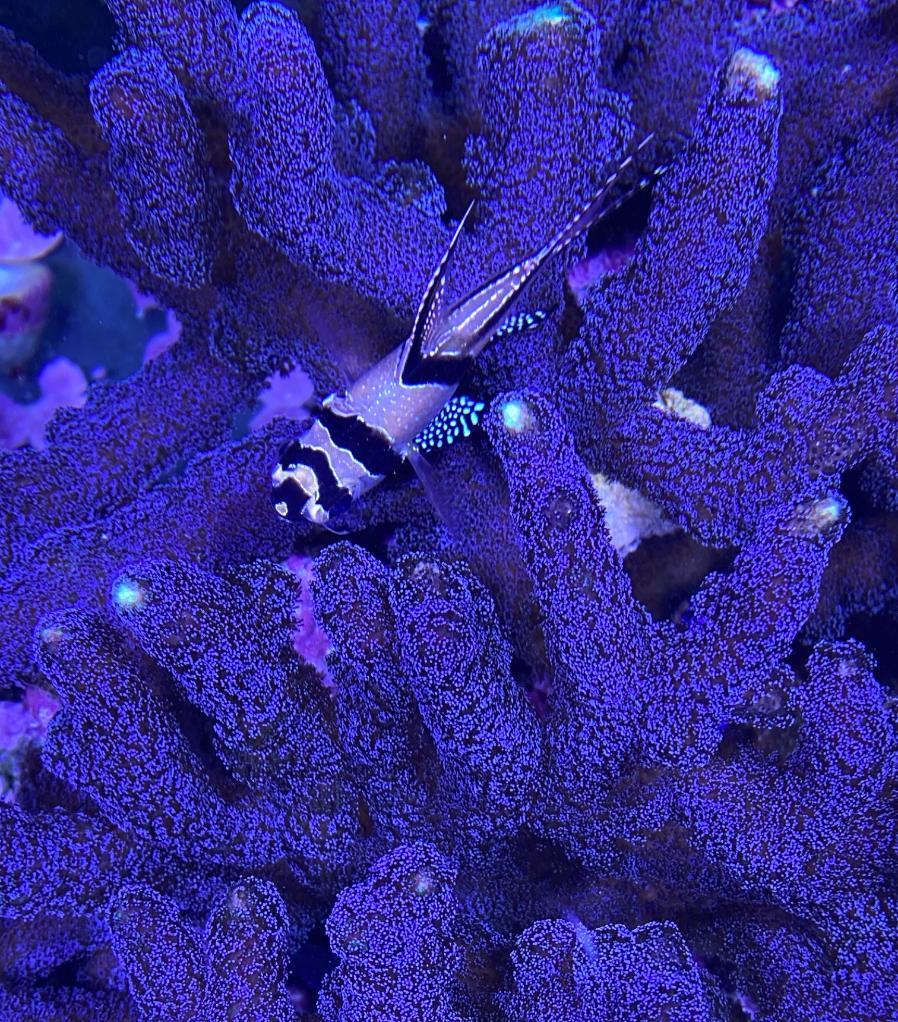 korall5 (2).jpg