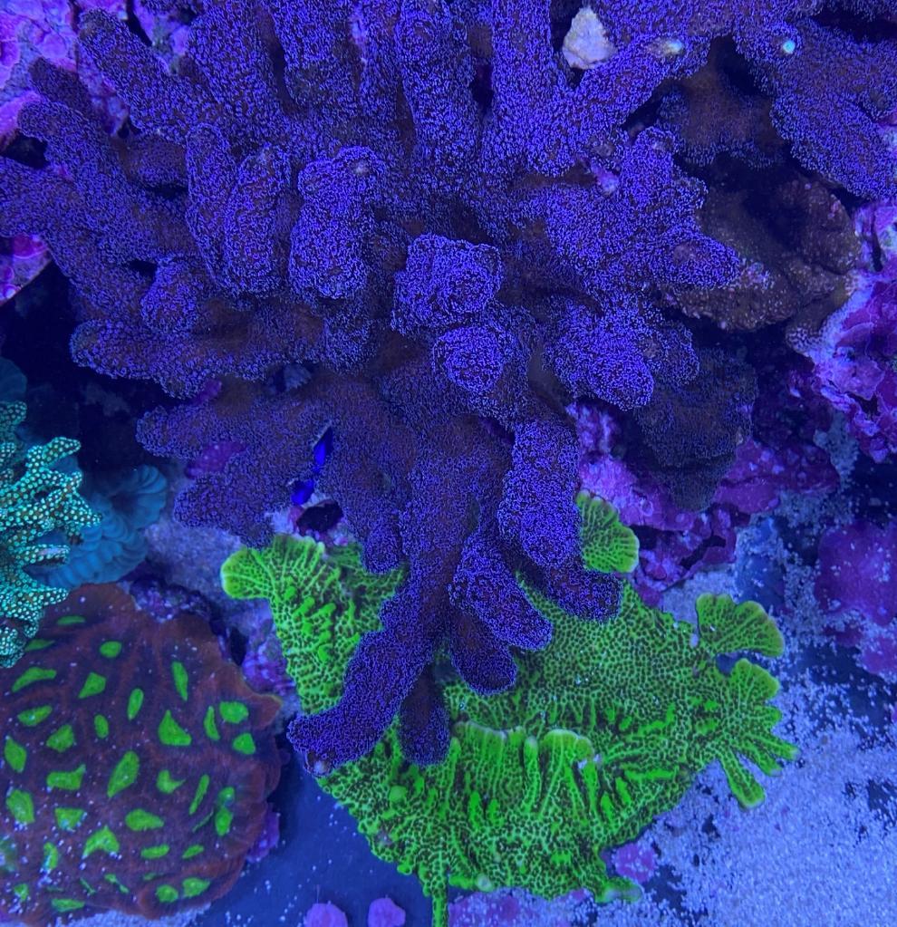 korall7 (2).jpg