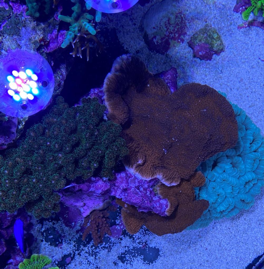 korall8 (2).jpg