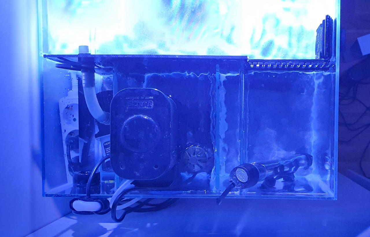 akvariet2.jpg