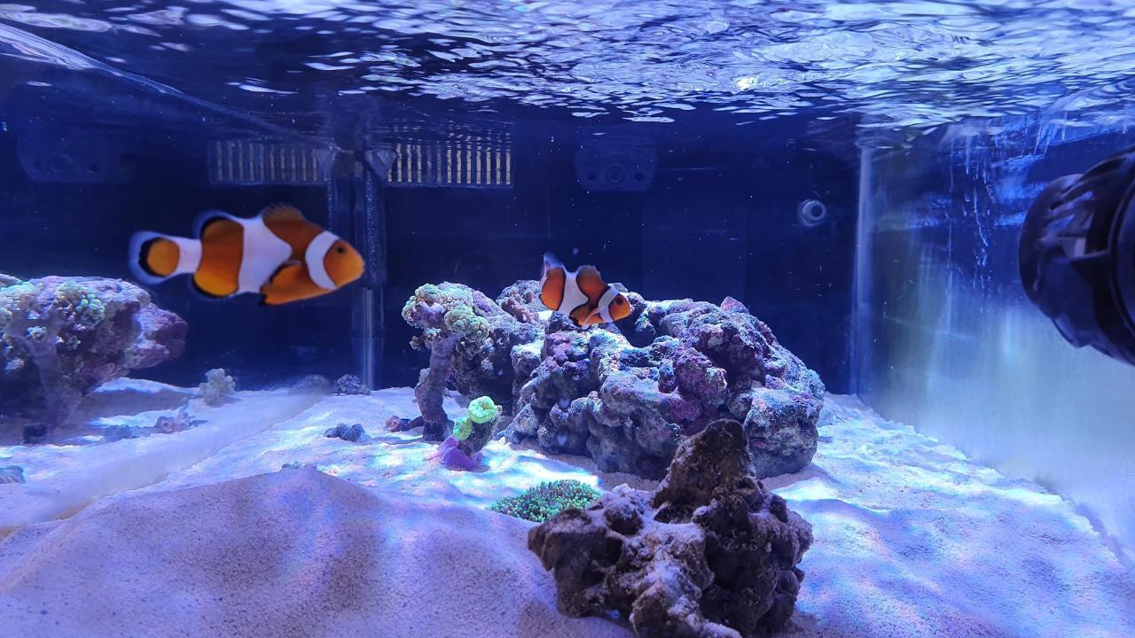 akvariet5.jpg