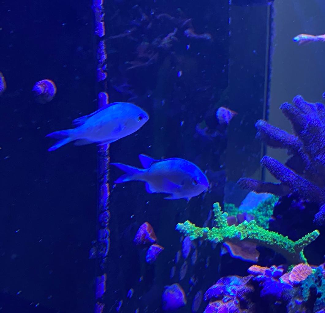 fisk (2).jpg