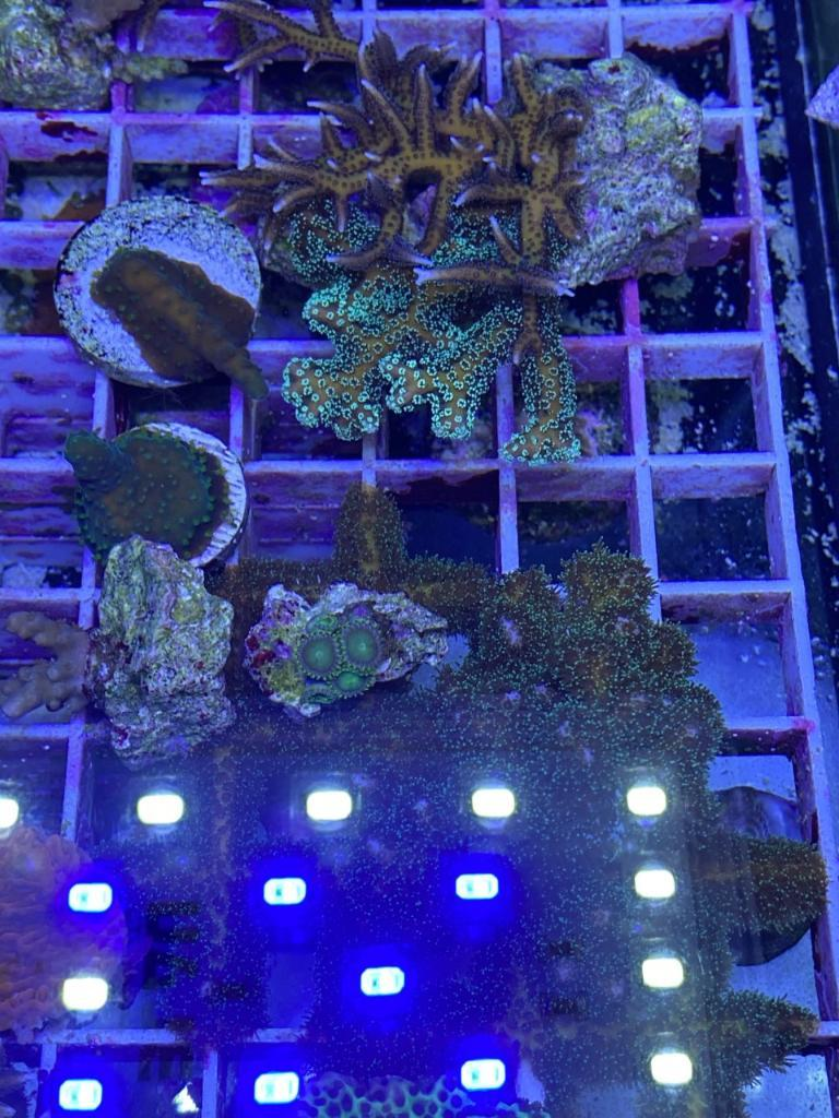 korall42.jpg