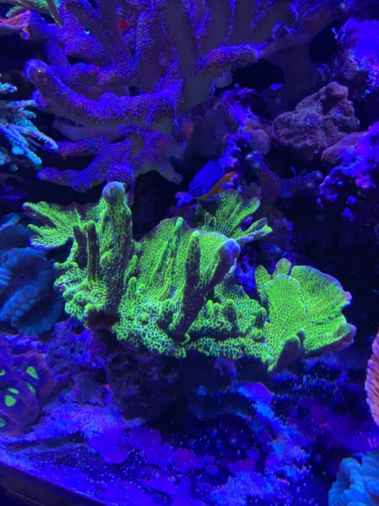 korall43.jpg